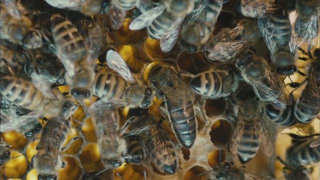 Il est comment… ce docu' sur les abeilles ?